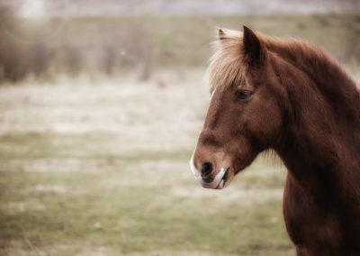 Pony auf einer Weide