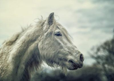 Fotograf für Pony